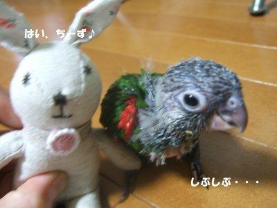 2008230-3n-suzu.jpg