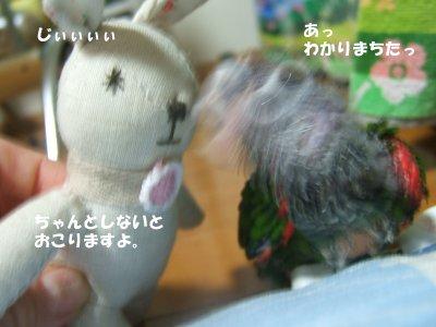 2008230-4n-suzu.jpg