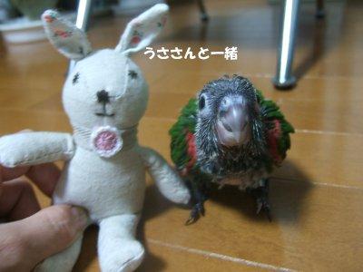 2008230n-suzu.jpg