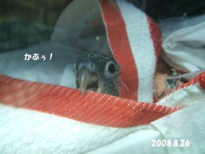 200826-2n-suzu.jpg