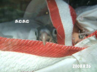 200826-3n-suzu.jpg