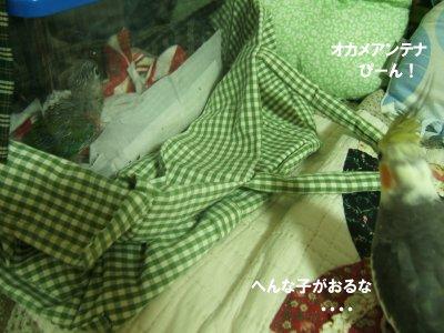 200826-4n-suzu.jpg