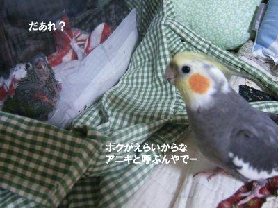 200826-5n-suzu.jpg