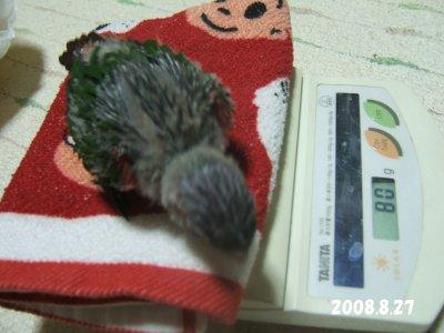 200827-2n-suzu.jpg