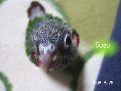 200828-3n-suzu.jpg