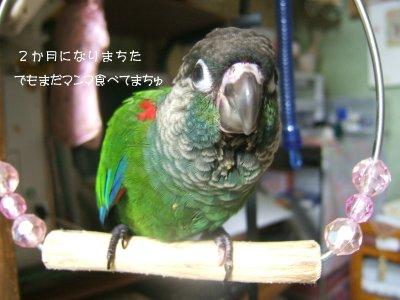200927n-suzu.jpg