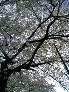 08-03-31_17-30.jpg