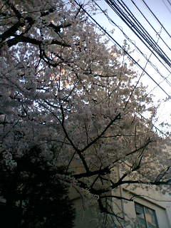 08-03-31_17-32.jpg