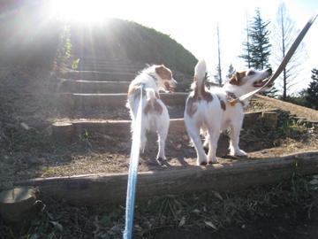 目指せ丘の上