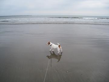 Chipper大洗海岸にて