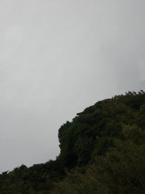 g010.jpg