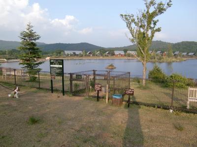 湖畔のドッグラン