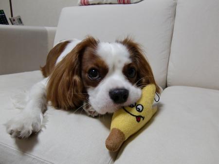 大好きなバナナ♪