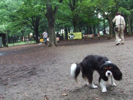 代々木公園ラン♪
