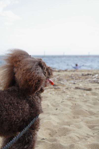 砂浜でまろん
