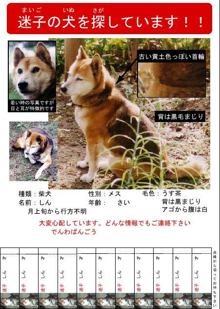 迷い犬を探してますポスター