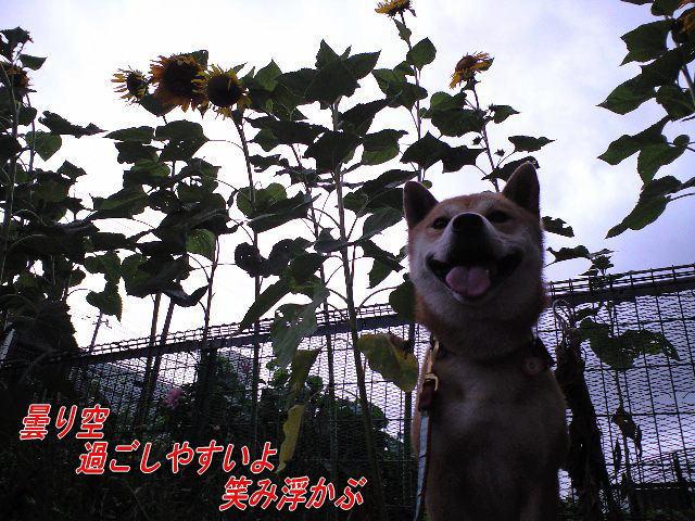 20080816rena.jpg