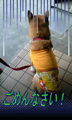 20080913ren3.jpg