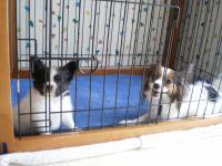 オリーブ&子犬