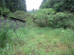 080601草刈り前