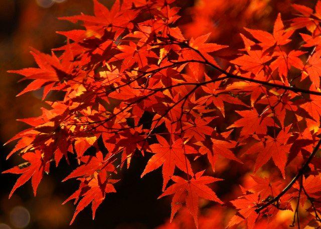 紅葉燃える