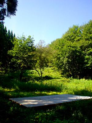 あきた森のテラス