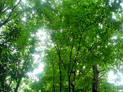 森のテラス