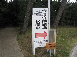 鵜の捕獲場所