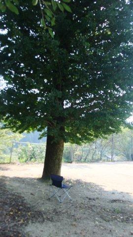イチョウの木陰