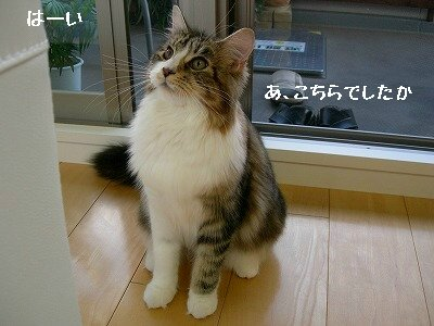 コピー ~ s-DSCN5435