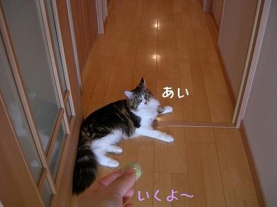 s-DSCN5696.jpg