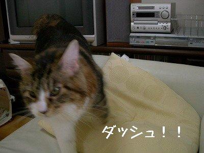 s-DSCN5740.jpg