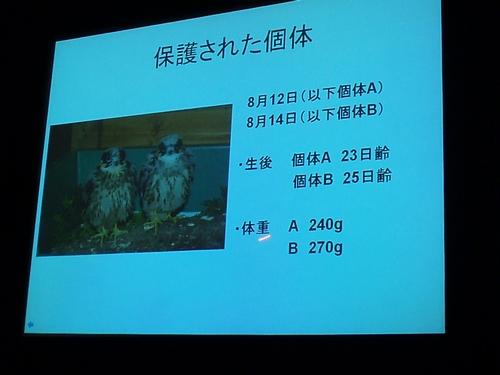 chigohayabusa02.jpg