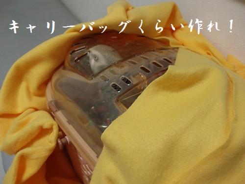 hinomarunosu2008122101.jpg