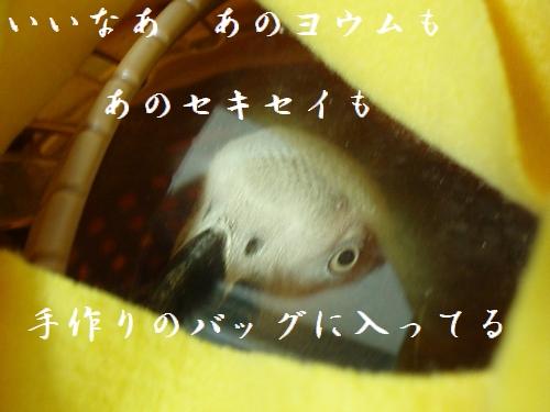 hinomarunosu2008122103.jpg