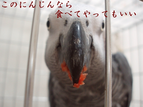 hinomarunosu2009010601.jpg