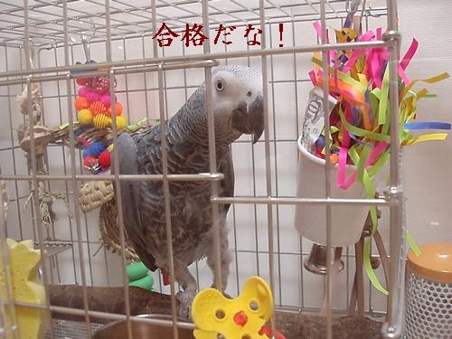 hinomarunosu2009010604.jpg