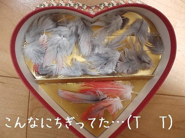 hinomarunosu2009011401.jpg