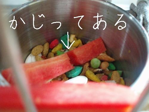 hinomarunosu2009013006.jpg