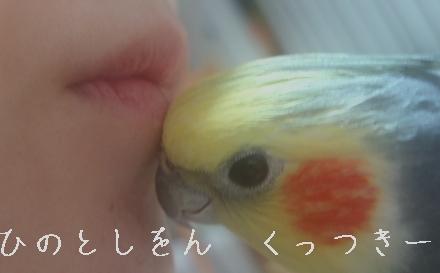 hinomarunosu2009021301.jpg