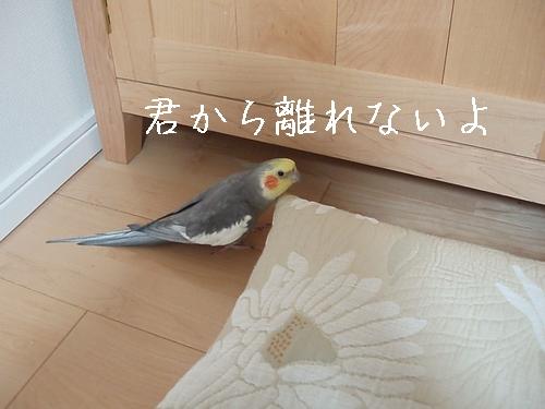 hinomarunosu2009022603.jpg