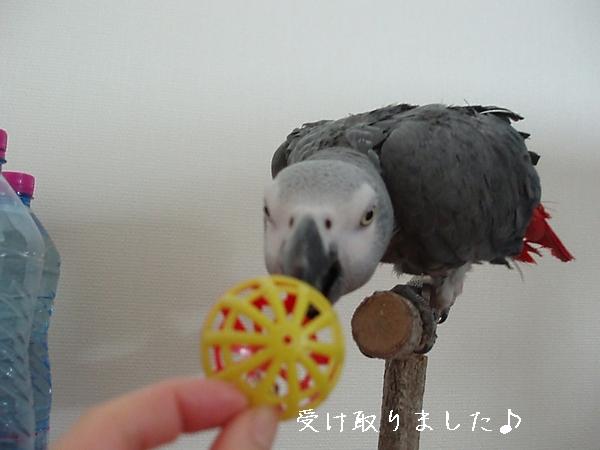 hinomarunosu2009030512.jpg