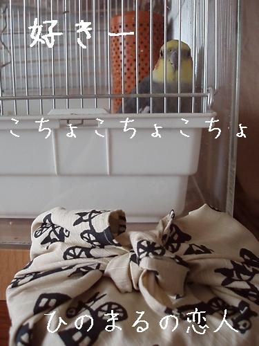 hinomarunosu20090515002.jpg