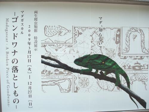 hinomarunosu20090619tokyo0201.jpg
