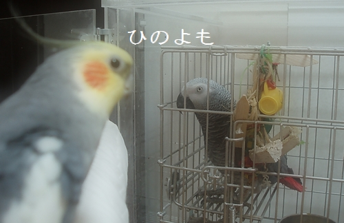 hinomarunosu2009072501.jpg