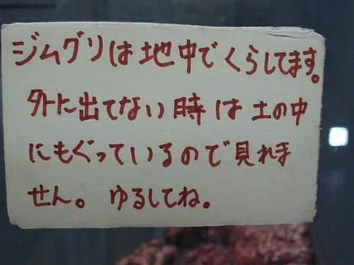 hinomarunosu2009082111.jpg