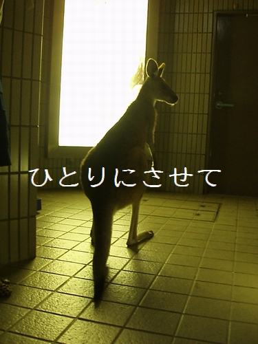hinomarunosu2009090404.jpg