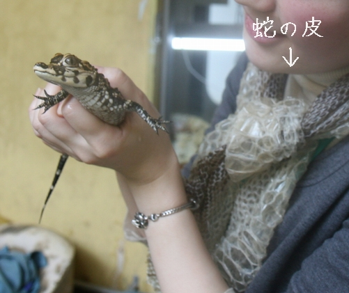 yousukouwani002.jpg