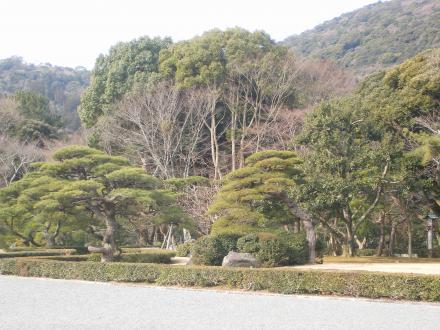 伊勢神宮内宮の森
