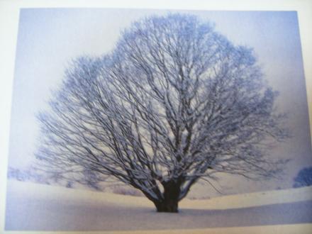大木の写真